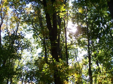 Woods 2015 012